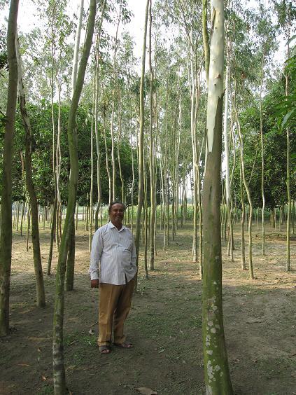 Ejeren af murstensfabrikken Shegan i hans skov
