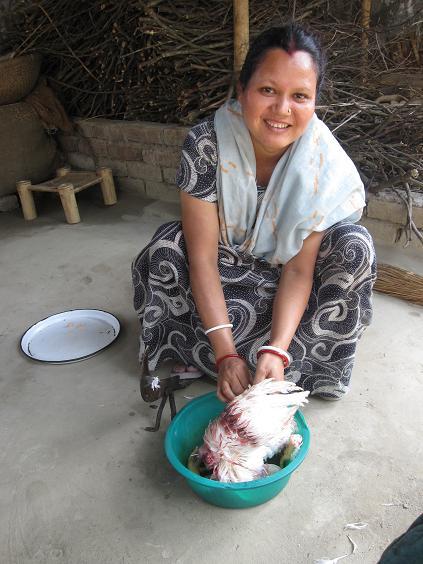 Mreduls mor og hønen